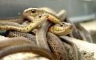 Serpents wallpaper 3