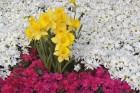 Fleurs wallpaper 2