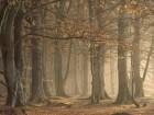 Forêts wallpaper 24