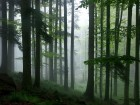 Forêts wallpaper 3