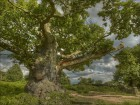 Forêts wallpaper 9