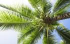 Palmiers wallpaper 1