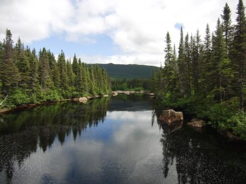 Rivière bordée de sapins