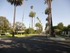 Palmiers le long d'une rue de Los Angeles