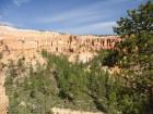 Nature verdoyante de Bryce Canyon