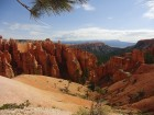 Hoodoos dans l'amphithéâtre naturel de Bryce Canyon