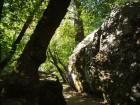 Chemin ombragé par des arbres