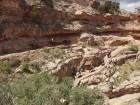 Randonnée à dos de mules dans le Grand Canyon