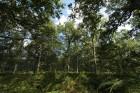 Forêt de Pontarmé